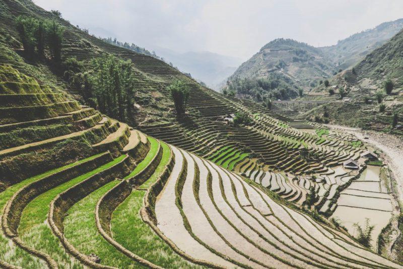 The beautiful rice fields of Sa Pa.